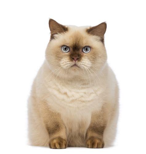 feline fatty liver picture 10