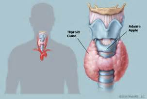 can urine therapy cure thyroid picture 17
