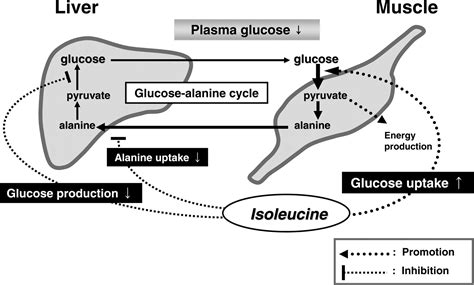 amino acids and enzymes for increasing blood flow picture 13