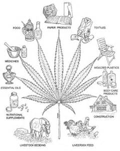 what can marijuana smoke do to a picture 14