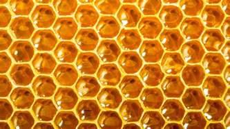 deviding honey bee hives picture 2