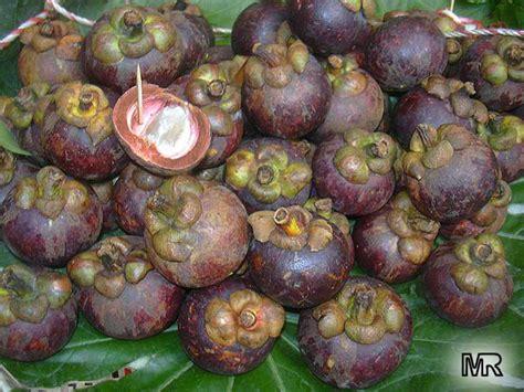 garcinia mangostana philippines picture 2