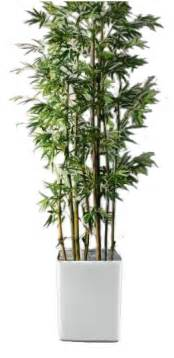 where to buy potted plants in metro manila picture 11