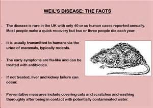 what is le cerbvas disease picture 9