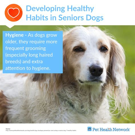 aging dogs health picture 13