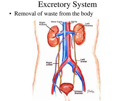 filling bladder through urethea for fun picture 10