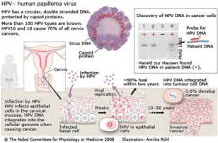 human papilloma virus first discovered picture 7