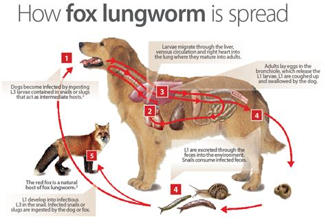 liver disease in dogs picture 5
