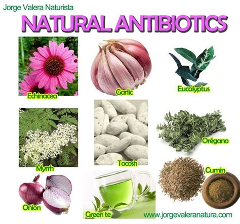what is the natural plant antiobotic ldm picture 4