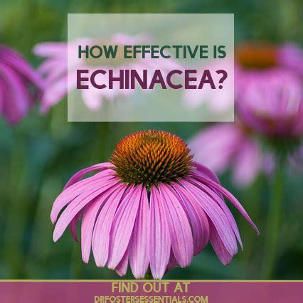 echinacea studies picture 6