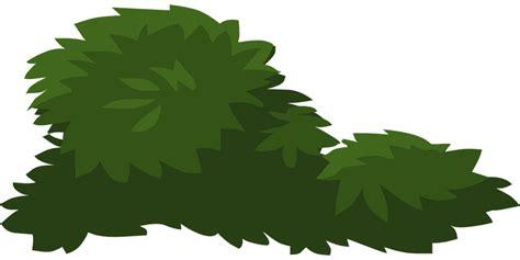 horsetail bush picture 7