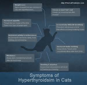 support gold thyroid medication for felines picture 2