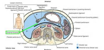 infection in the intestines or colon picture 19