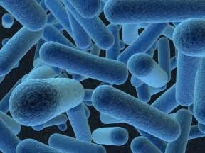 general stages of bacterial infection picture 7