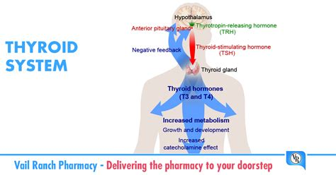 thyroid m picture 1
