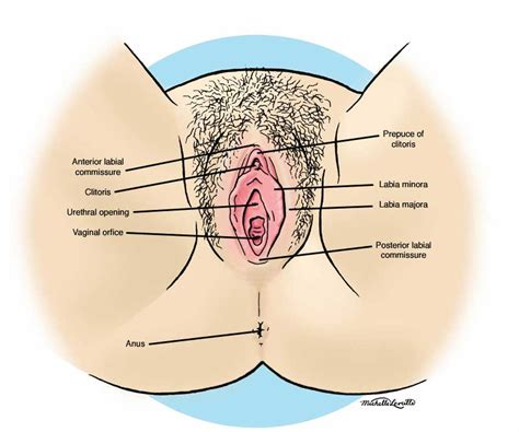 how is a ultersound performed on female bladder picture 6