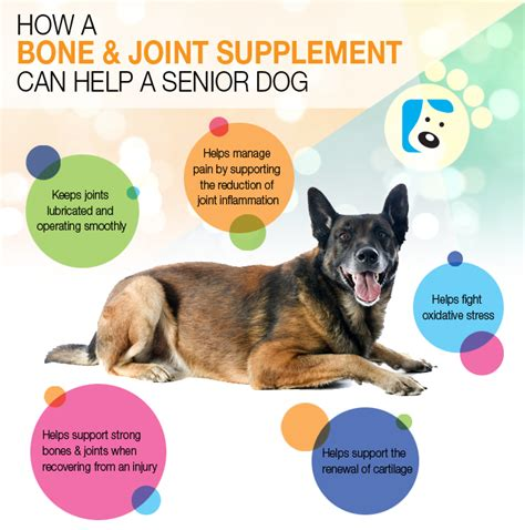 aging dogs health picture 11