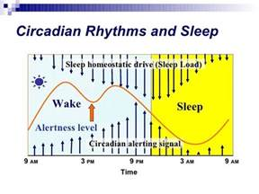 circadian rhythm sleep disorders picture 3