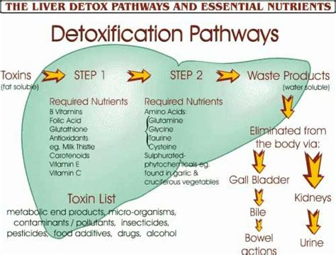 what nutrients does the liver need to metabolize picture 13