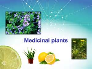 herbal plants and its uses with procedures picture 13