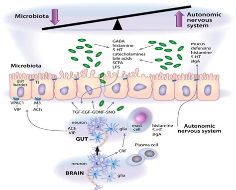 microbial growth picture 7