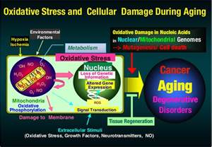 digestion enzymes picture 18