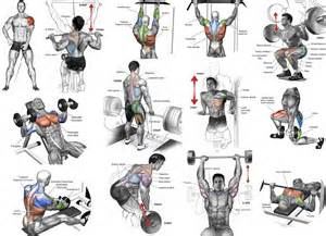 muscle building exercises picture 7