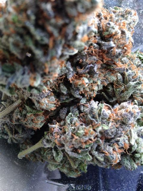 get paid to smoke pot picture 5