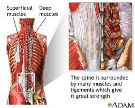 lower abdonimal muscle twitches picture 3