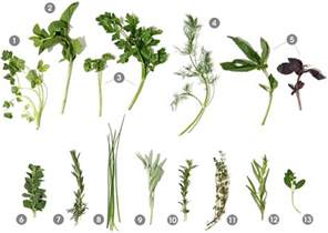 what herbs are like barbiturates picture 11