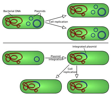 bacterial transformation method picture 9