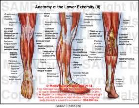 skin structure visuals picture 9
