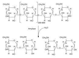 alpha amylase amylose digestion picture 9