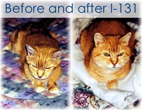 cat hyperthyroid joint pain relief picture 18