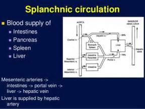 Vessel circulation picture 1