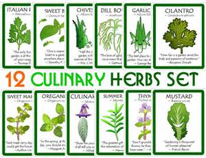 herbs like mulundo and abasi for growth of picture 11