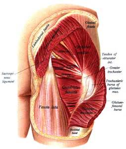 gluteus maximus syndrome picture 6