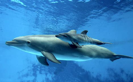 dolphins sleeping habits picture 7