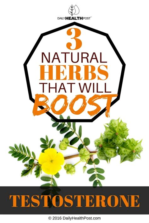 boost testosterone naturally herbs picture 2