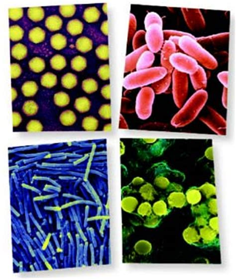 anti microbial picture 13