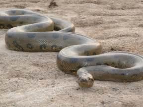 anaconda diet picture 9
