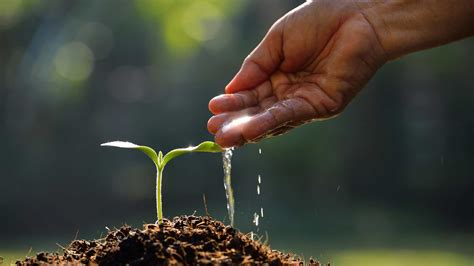 incoming search terms for the article water plants picture 5
