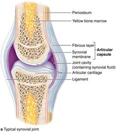 diagram of knee joint picture 2