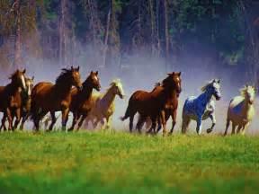 gambar penis kuda picture 1