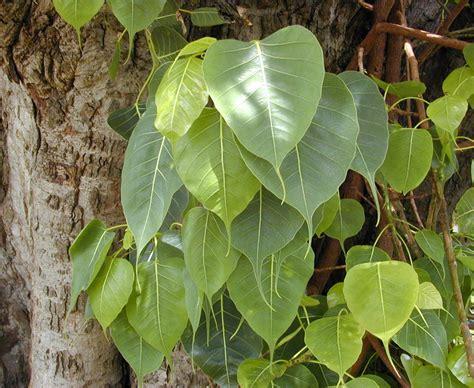 maram valara tamil tips picture 9