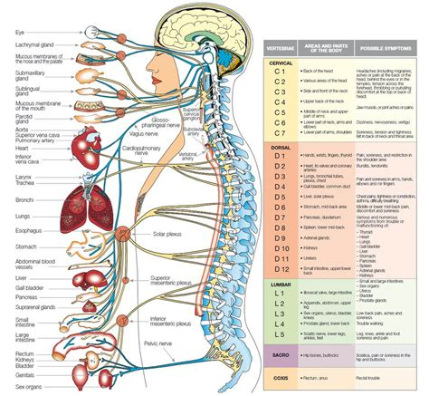 nerve food dr chase side effects picture 3