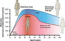 testosterone levels and osteoporosis picture 19