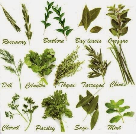 list of herbal medicine and their uses in picture 12