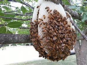 bee hives pictures picture 18
