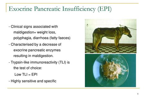 canine epi and liver disease picture 9